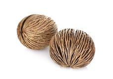 Graine d'arbre de suicide, graine de puanteur de puanteur ou Othalanga, oddloam de Cerbera Photo stock