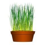 Graine dans l'herbe de flowerpot illustration stock