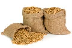 Graine de blé Photo stock