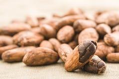 Graine de cacao image libre de droits