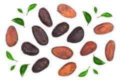 Graine de cacao décorée des feuilles de vert d'isolement sur la vue supérieure de fond blanc Configuration plate Image libre de droits