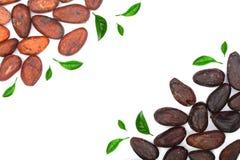 Graine de cacao décorée des feuilles de vert d'isolement sur le fond blanc avec l'espace de copie pour votre texte Vue supérieure Image stock