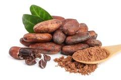 Graine de cacao non épluchée avec la poudre de feuille et de cacao dans la cuillère en bois d'isolement sur le fond blanc Photos libres de droits