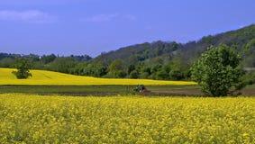 Graine de colza Image stock