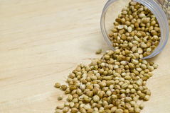 Graine de coriandre Image stock