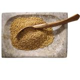 Graine de moutarde Photo stock