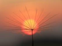 Graine de pissenlit avec le soleil Images libres de droits