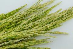 Graine de riz non-décortiqué Image libre de droits