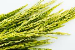 Graine de riz non-décortiqué Photographie stock libre de droits