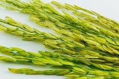 Graine de riz non-décortiqué Photos libres de droits