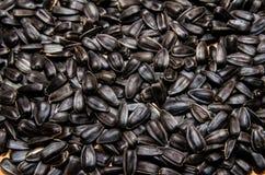 Graine de tournesol organique Photo stock
