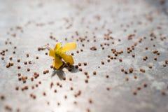 Graine et fleur Images libres de droits