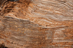 Grained wood Royalty Free Stock Photo