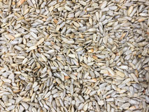 Graines photo stock