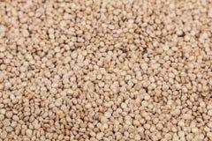 Graines blanches de quinoa - chenopodium quinoa Photographie stock libre de droits