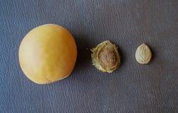 Graines d'abricot et d'abricots Photos libres de droits