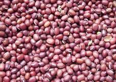 Graines d'haricot Photos stock