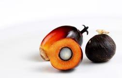 Graines d'huile de palmier Photographie stock libre de droits