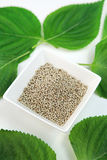 Graines d'ocymoides de Perilla Images libres de droits