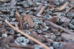 Graines dans des déchets de bois photos stock