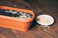 Graines dans un pot de fleur sur une table en bois image stock
