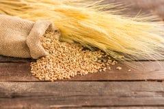 Graines de blé photo libre de droits