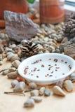 Graines de bonsaïs La vie toujours avec des pierres et des cônes Graines imbibées de Thunbergii sur un filon-couche de fenêtre Photographie stock libre de droits