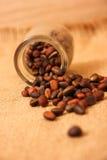 Graines de cèdre Photo libre de droits