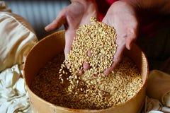 Graines de céréale dans le panier image stock