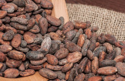 Graines de cacao Photos stock