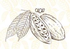 Graines de cacao de chocolat Photos libres de droits