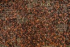 Graines de cacao crues Image libre de droits