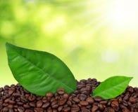 Graines de café Photos stock