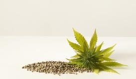 Graines de chanvre crues de fleur verte de cannabis Images libres de droits