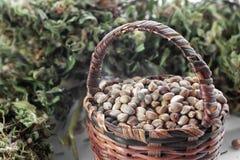 Graines de chanvre dans un petit panier Photo stock