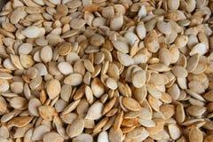 Graines de citrouille Photo libre de droits