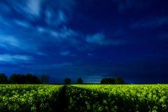Graines de colza la nuit Image libre de droits