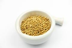 Graines de coriandre sèches sur le fond blanc Photographie stock