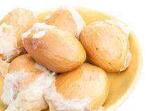 Graines de durian d'isolement sur le fond blanc Photographie stock libre de droits