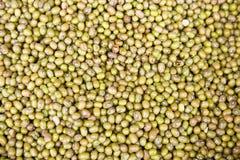 Graines de fèves de mung Photographie stock libre de droits