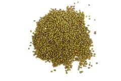 Graines de fèves de mung Image stock