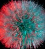 Graines de fleur d'arnica image libre de droits