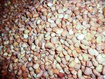 Graines de haricot de Brown Photographie stock libre de droits