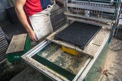 Graines de laitue Photos stock