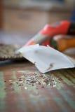 Graines de laitue Photo stock