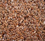 Graines de lin Photographie stock libre de droits