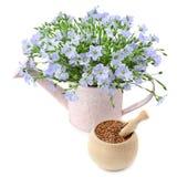 Graines de lin et fleurs Photographie stock libre de droits