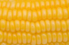 Graines de maïs images libres de droits