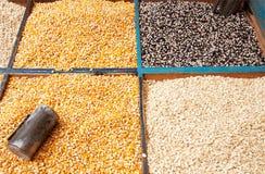 Graines de maïs images stock
