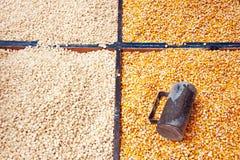 Graines de maïs photos libres de droits